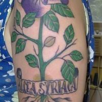 Hibiscus plant coloured tattoo