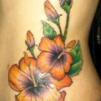 Orange hibiscus flowers and blossom