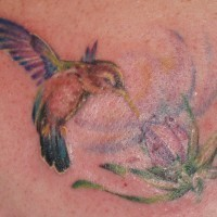 Real hummingbird tattoo in colour