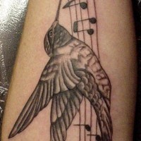 Hummingbird on musical notes tattoo
