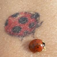 Marienkäfer auf Tattoo und ein echt