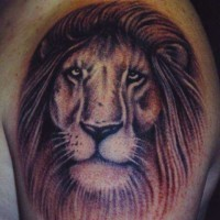 Old male lion head tattoo