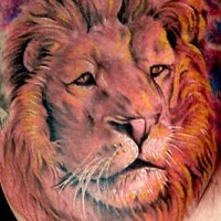 Realistic lion tattoo in colour