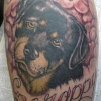scrappy rottweiler cane memoriale tatuaggio