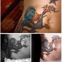 Tatuaggio pittoresco sulla pancia l'uccello azzurro giallo sul ramo