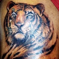Realistic colourful tiger tattoo