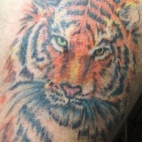 Coloured realistic tiger head  tattoo