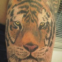 Realistic detailed tiger head tattoo