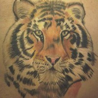 Realistic tiger  head tattoo