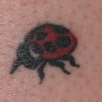 Kleines Tattoo von Marienkäfer