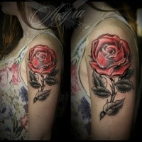 Traditionally colored old school style red rose tattoo on girl's shoulder