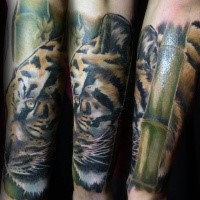 Traditionally colored tiger and bamboo tattoo on forearm in realism style