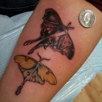 Two colorful moth tattoo on arm