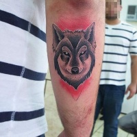 Usual old looking colored arm tattoo of mysterious wolf head