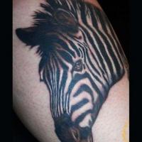 Üblicher Stil gemaltes großes schwarzweißes Zebra Tattoo am Bein