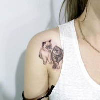 Very beautiful looking colored shoulder tattoo of cat couple