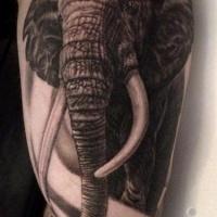 molto realistico nero e bianco massiccio elefante tatuaggio su braccio