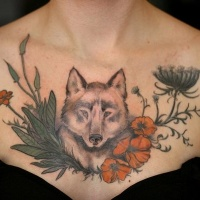 Weird wolf in red poppy flowers unique style detailed tattoo on chest