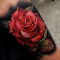 eccezionale dettagliato grande rosa rossa colorato con gocce d'acqua tatuaggio su gamba