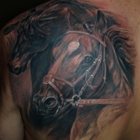 meraviglioso ritratto di cavallo scuro corsi tatuaggio sulla scapola