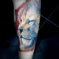 Wonderful realism style colored forearm tattoo of steady lion face