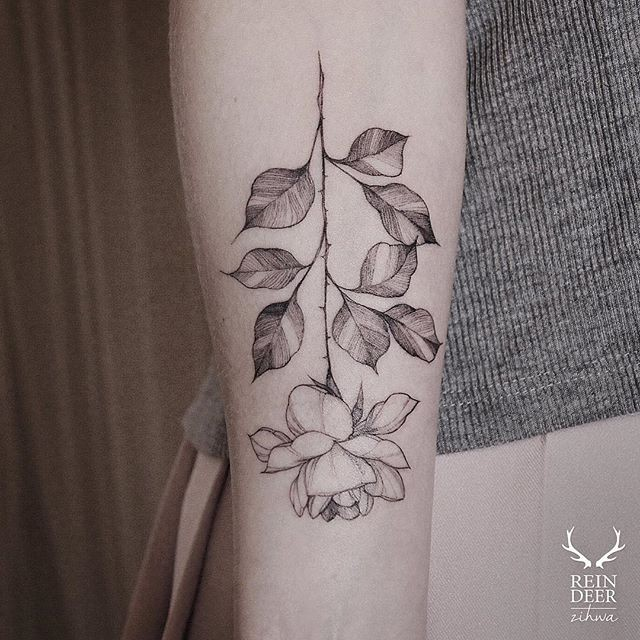 Typical blackwork style forearm tattoo of amazing looking rose by Zihwa